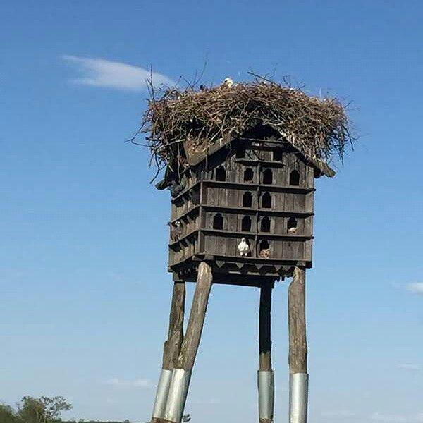 #tourguide #tarnai #nature #hungary #ungarn #birds #hortobágy #travel #tourist #tourguides #guiding #guide #ökotúra #conservation #nationalpark #animals #turavezeto #turavezetes #túra #ökotúra #ecotour #hungary #ungarn #birds #birdwatching #hortobagy #ciconia #turism