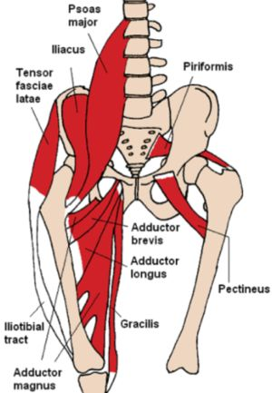 Image result for why external rotation in fracture neck femur