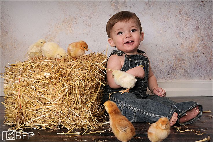 Baby chicks!!! Hay bail was donated to the studio. – CUSTOMER PROPS