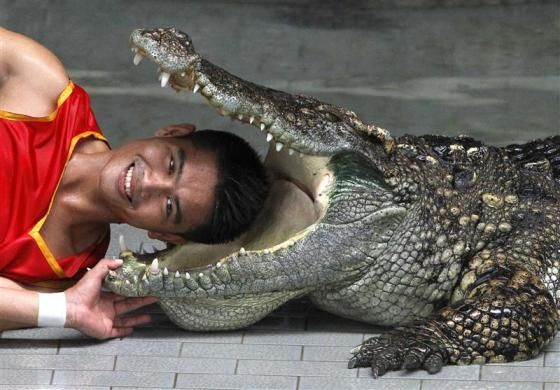 Zoo performer Theerapone Manolai smiles as he puts his head between the jaws of a crocodile during a performance for tourists at the Sriracha Tiger Zoo, about 120 km (74 miles) east of Bangkok August 16, 2011. Kanthida Jantanct and Theerapone, both 28, from the province of Chaiyaphum, who have been crocodile performers at the zoo for almost ten years, earn at least 30,000 Baht (1,000 USD) per month for performing shows for at least 2,000 tourists, three times a day, to support their family.