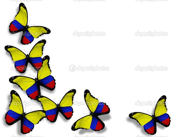 Colombian flag butterflies, isolated on white background — Stock ...