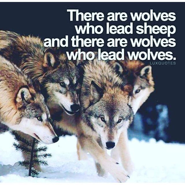 654 best images about wolf sayings and wolf wisdom en ...