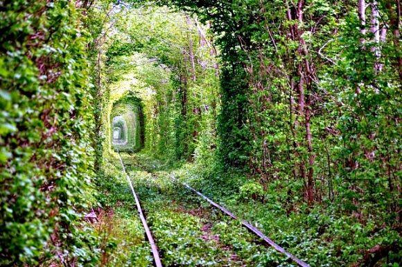 Tunnel of Love - Ukraine: Bucket List, Favorite Places, Nature, Ukraine, Tree, Beautiful Place, Travel, Tunnel