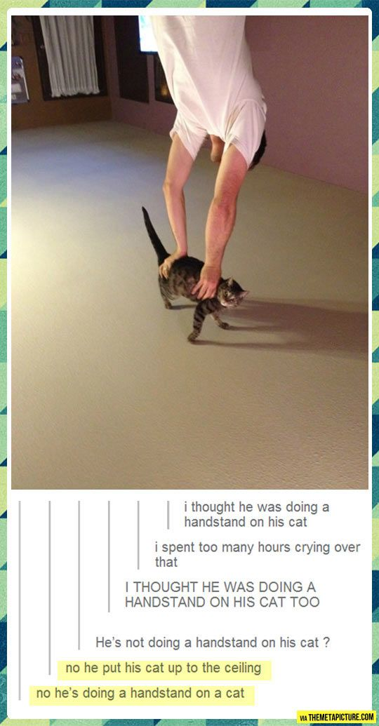 Cat handstand // funny pictures - funny photos - funny images - funny pics - funny quotes - #lol #humor #funnypictures