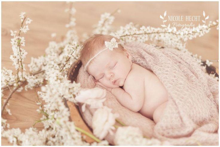 Landshut Babyfotograf – Familienfotos von Nicole Hecht – Neugeborenenbilder im Atelier » vereinigung-professioneller-kinderfotografen