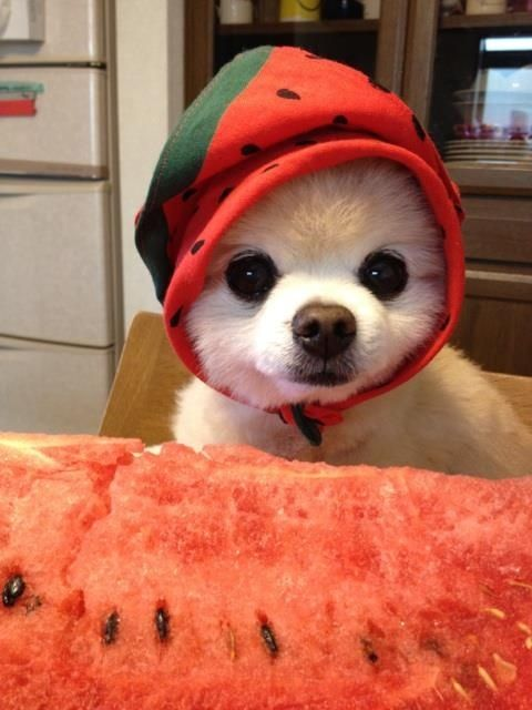 His hobbies include dressing up as a watermelon… | 38 Things You Need To Know About The Japanese Boo