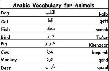 Arabic Vocabulary Words for Animals - Learn Arabic