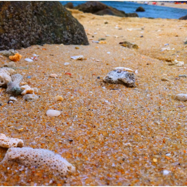 Sand & shell: Sands, Shells, Travel, Places