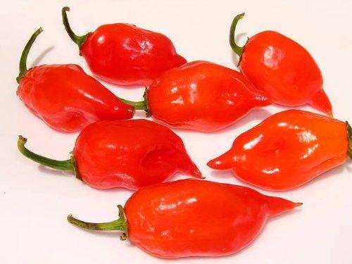 50 HOT RED HABANERO PEPPER Capsicum Chinense Seeds #SeedvilleUSA