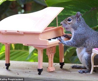 Squirrel kiss meme - photo#34