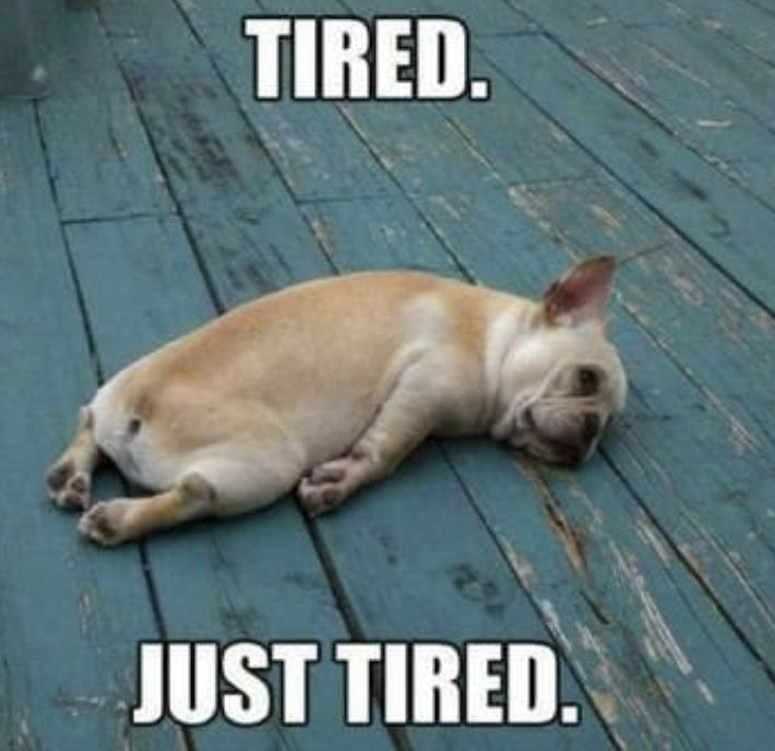 Tired Just Tired Tired Funny Dog Memes Funny