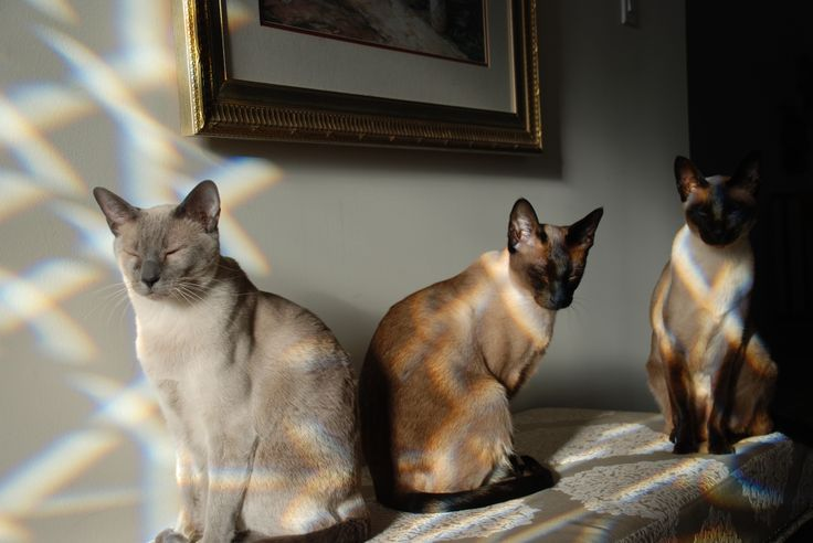 When you have sunlight streaming through bevelled glass, suddenly cats have argyle sweaters on!