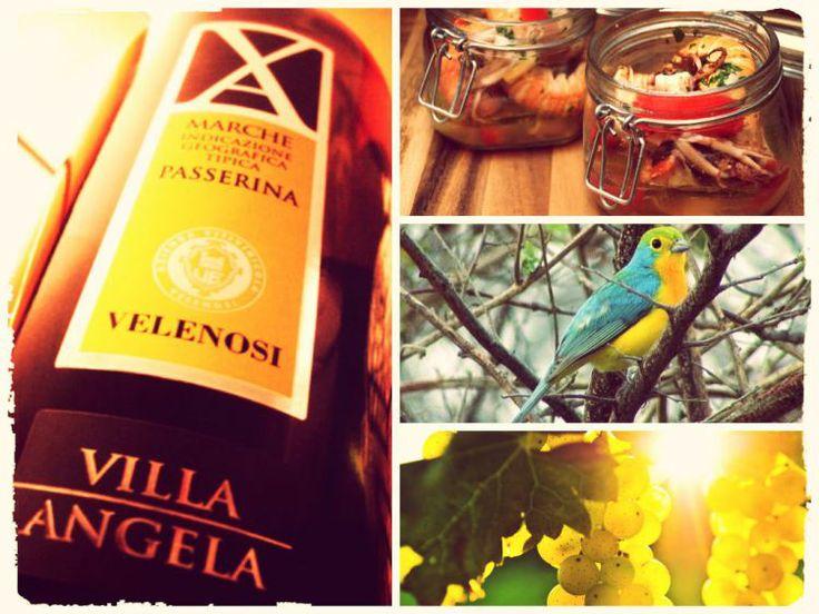 Vini marchigiani: la Passerina