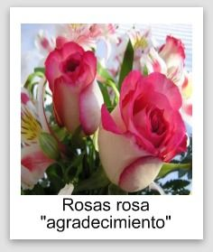 M s de 25 ideas fant sticas sobre significado de rosas - Significado rosas blancas ...