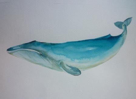 Blue WHALE: