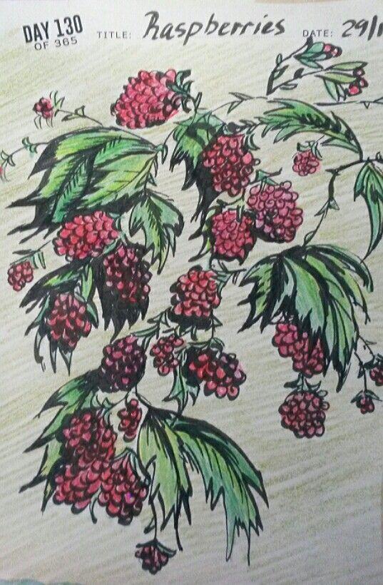 Raspberries drawing