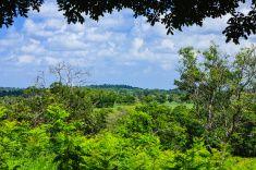 Colombia, South America - Los Llanos stock photo