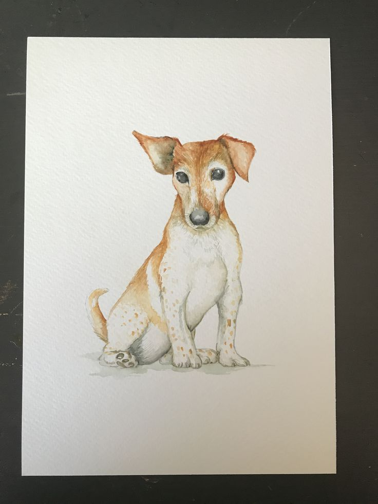 My most recent pet portrait. A gorgeous jack Russell watercolour painting. If you want to commission a portrait of your four legged friend, just get in touch.