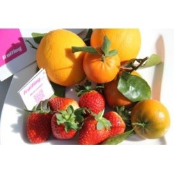 Disfruta de las mejores frutas de Huelva con este Pack de Fresas, Mandarinas Navelate y Naranjas Nadorcott ecológicas   DESDE 25 euros y Gastos de envío GRATIS    ¡Del campo a tu mesa!