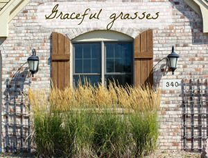 Using grasses in your landscaping.  Some real life examples from yards in my neighborhood.