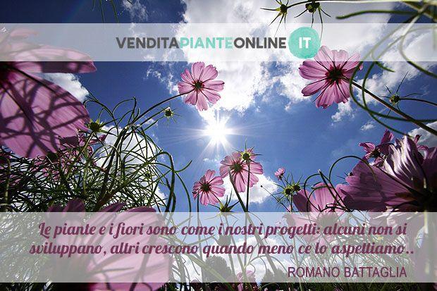 """www.venditapianteonline.it """"Le piante e i fiori sono come i nostri progetti: alcuni non si sviluppano, altri crescono quando meno ce lo aspettiamo."""" Romano Battaglia"""