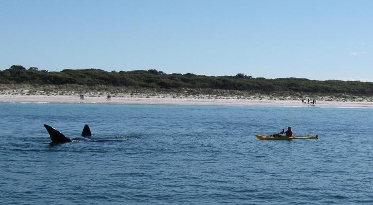 Middleton beach whales
