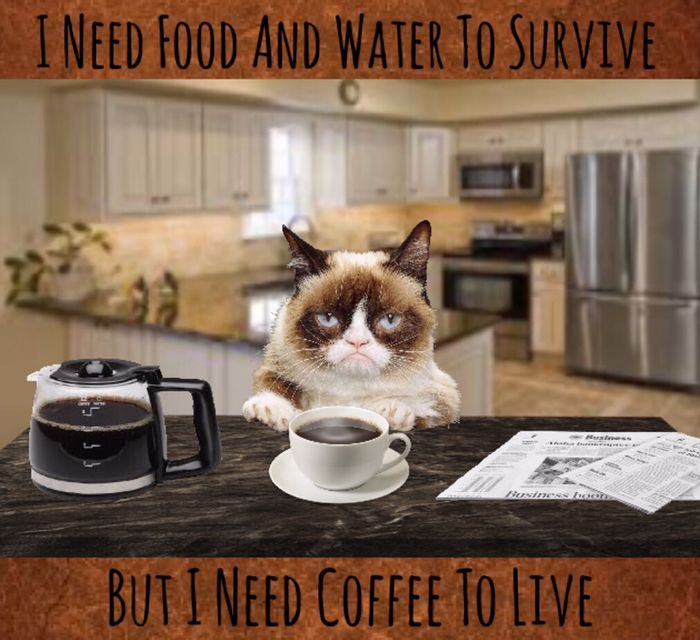 I Need Food And Water To Survive But I Need Coffee To Live