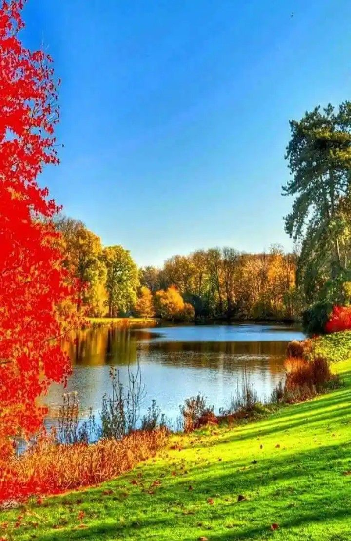 Nice View Trees River Visit This Website To See More Idea Http Theparttime Site R Beautiful Landscape Wallpaper Beautiful Places Nature Nature Pictures