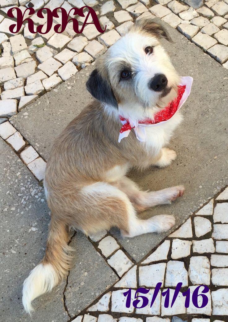 KIKA, assim se chama esta bonita cadelinha que habita connosco ....