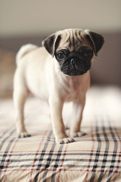 I want him now!