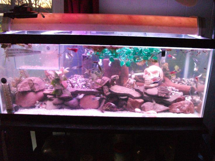 20 gallon Guppy tank. I still need more Pool filter sand, but I've got enough gravel.