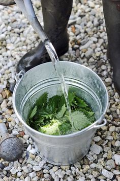 Plantengier maken #gardening #moestuin