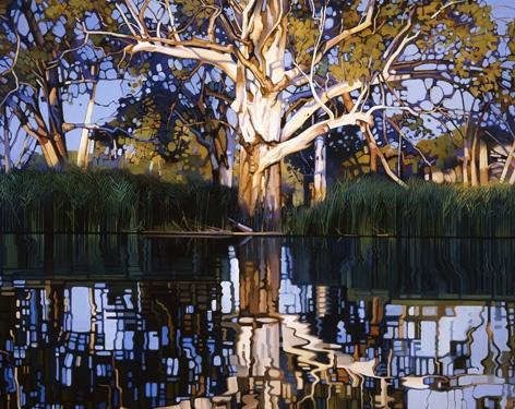 Australian Eucalyptus