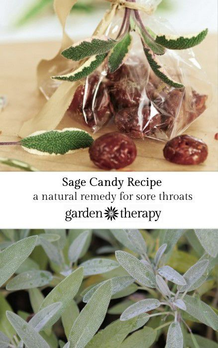 Sage Candy Recipe - an ancient remedy for the inflammation of sore throats #herbalhealing #coldandflu #Naturalhealing #wellness #gardentherapy