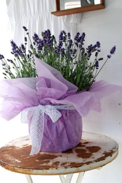 Best potted plant centerpieces ideas on pinterest