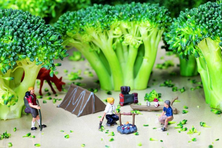 Camping Among Broccoli Jungles Miniature Art