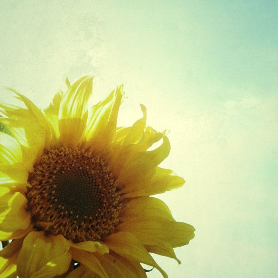 Sunflower by CassiaBeck.