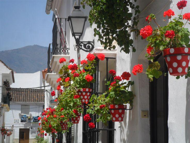 Flores En La Calle Estepona M 225 Laga Espa 241 A Arquitetura