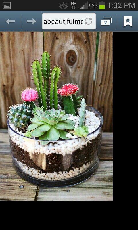 Mini Cactus Garden Garden Pinterest Mini Cactus