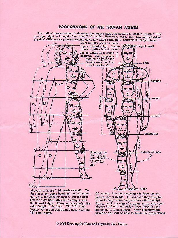 Body Proportions Great stuff!