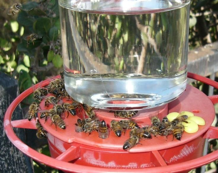How to keep bees away while camping Camping Pinterest