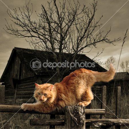 Perzische katten zittend op het hek in oude dorp