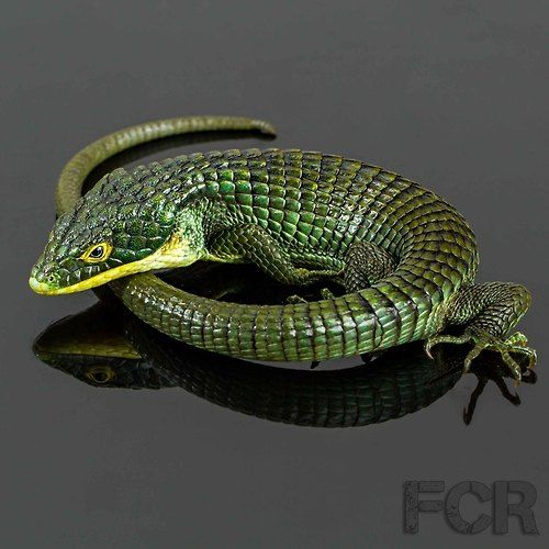 Abronia graminea is an endangered arboreal alligator lizard