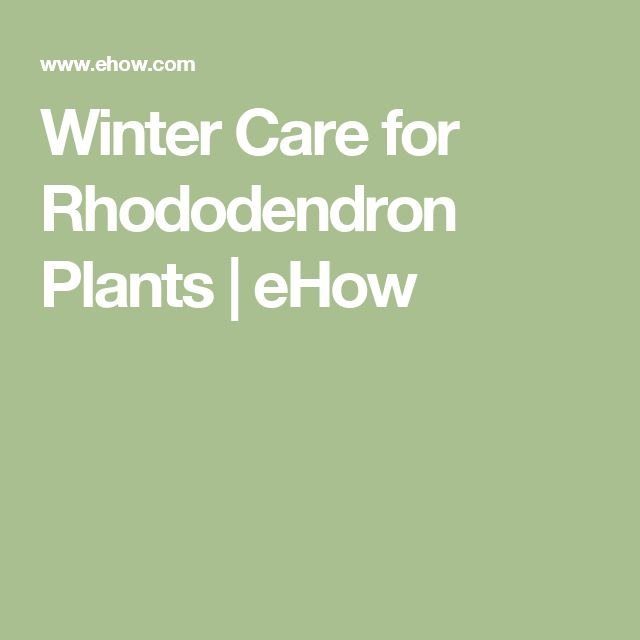 Winter Care for Rhododendron Plants | eHow