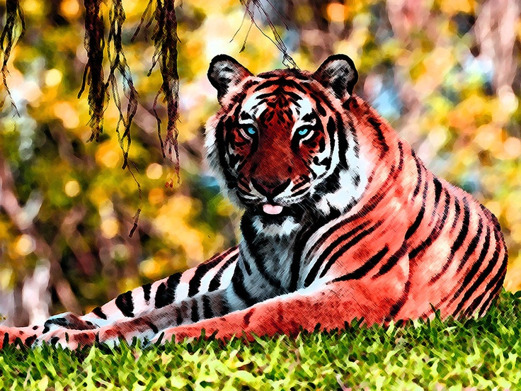 RED TIGER by .... DCanas7 | Beautiful Predators | American ...