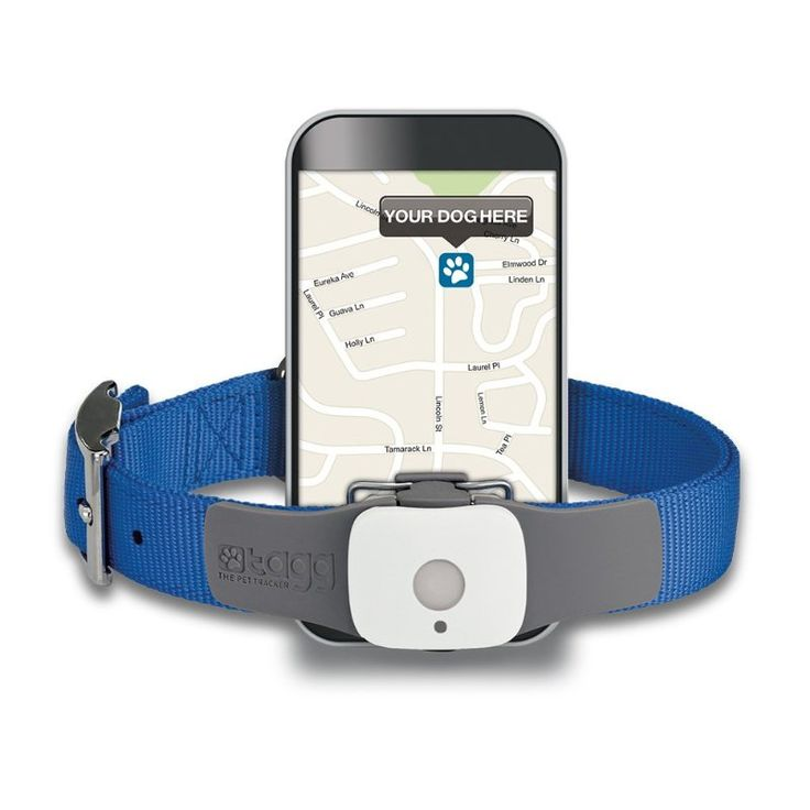GPS pet tracker with phone app...my dog uses this, used to be called Tagg, now called Whistle GPS tracking collar device. If dog leaves house or yard, u get an immediate text to alert u & tracks pet's movement, gives u pet location, never lose ur pet! worth the money. GPS worn on collar, charge battery 1 per month.