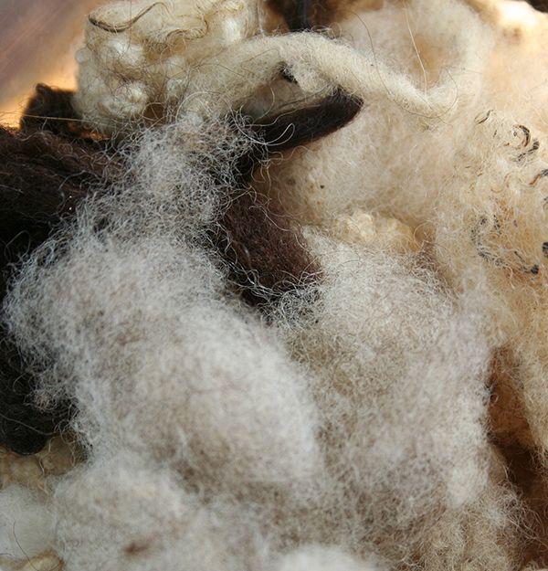 Lampaan villasta syntyy ihanaa, pehmoista lankaa. Oulu (Finland)