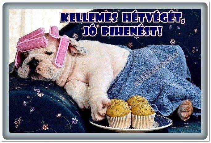 Kellemes Hetveget Funny Dog Videos Lazy Dog Breeds Funny Dogs