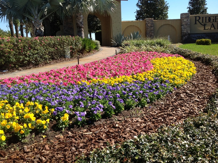 pink petunias, blue and yellow pansies grown by Lambs Nursery Planted by Flowerscape Solutions