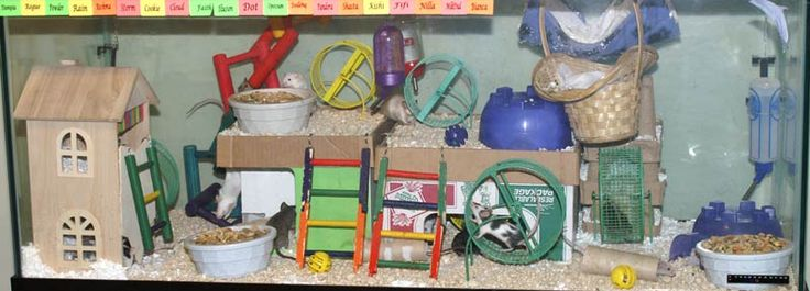1000 images about mice mouse meece on pinterest for Hamster bin cage tutorial
